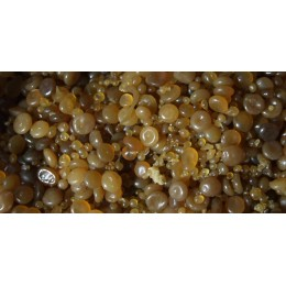 Клей костный гранулированный 0,5 кг.